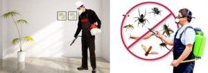 مكافحة حشرات بالمدينة
