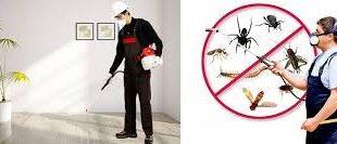 شركة مكافحة حشرات بالمدينة
